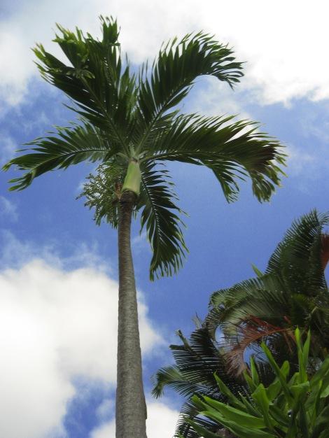 hawaii12 010