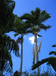 Hawaii6 027
