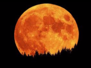 the-full-honey-moon-is-tonight